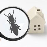 遺品整理に伴う害虫駆除について