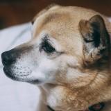 遺品整理で故人が飼っていた犬や猫はどうなるの?